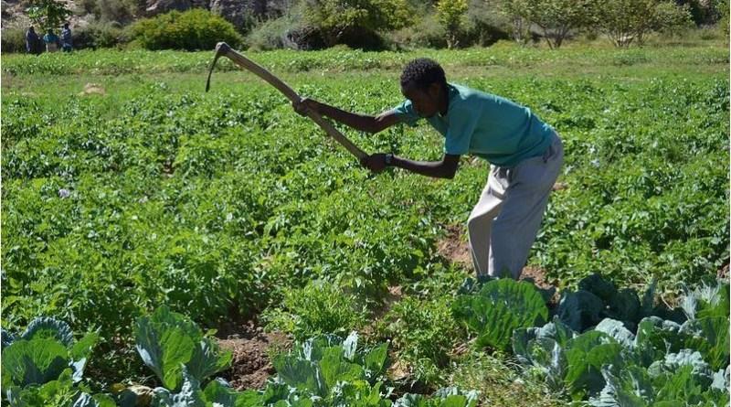farmers in somaliland