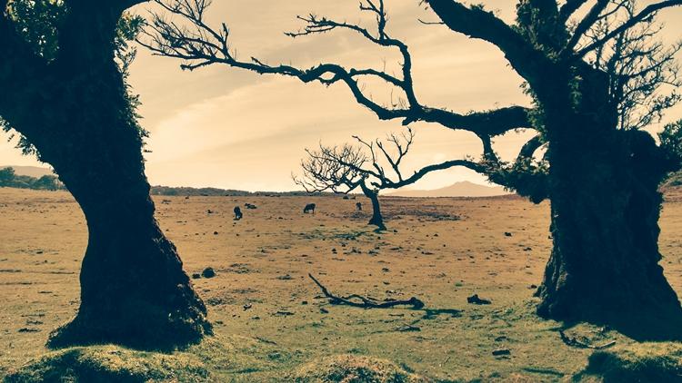 trees_desert