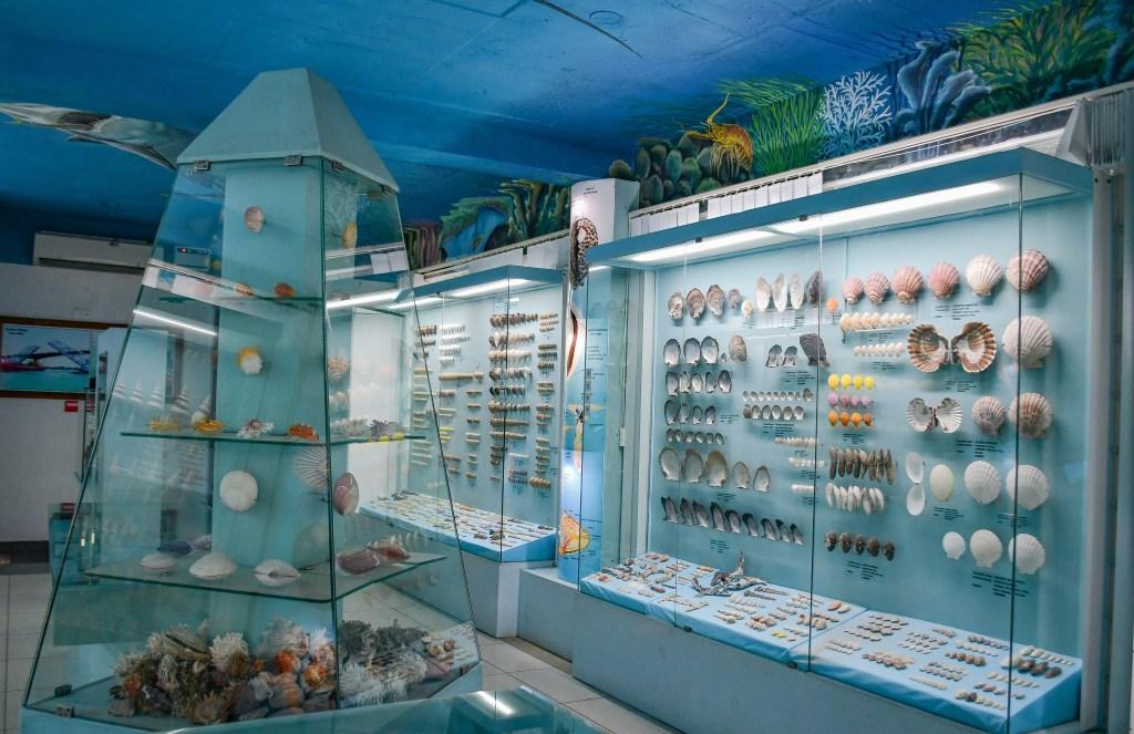 Shell-Museum-Mahabalipuram-Aafiya
