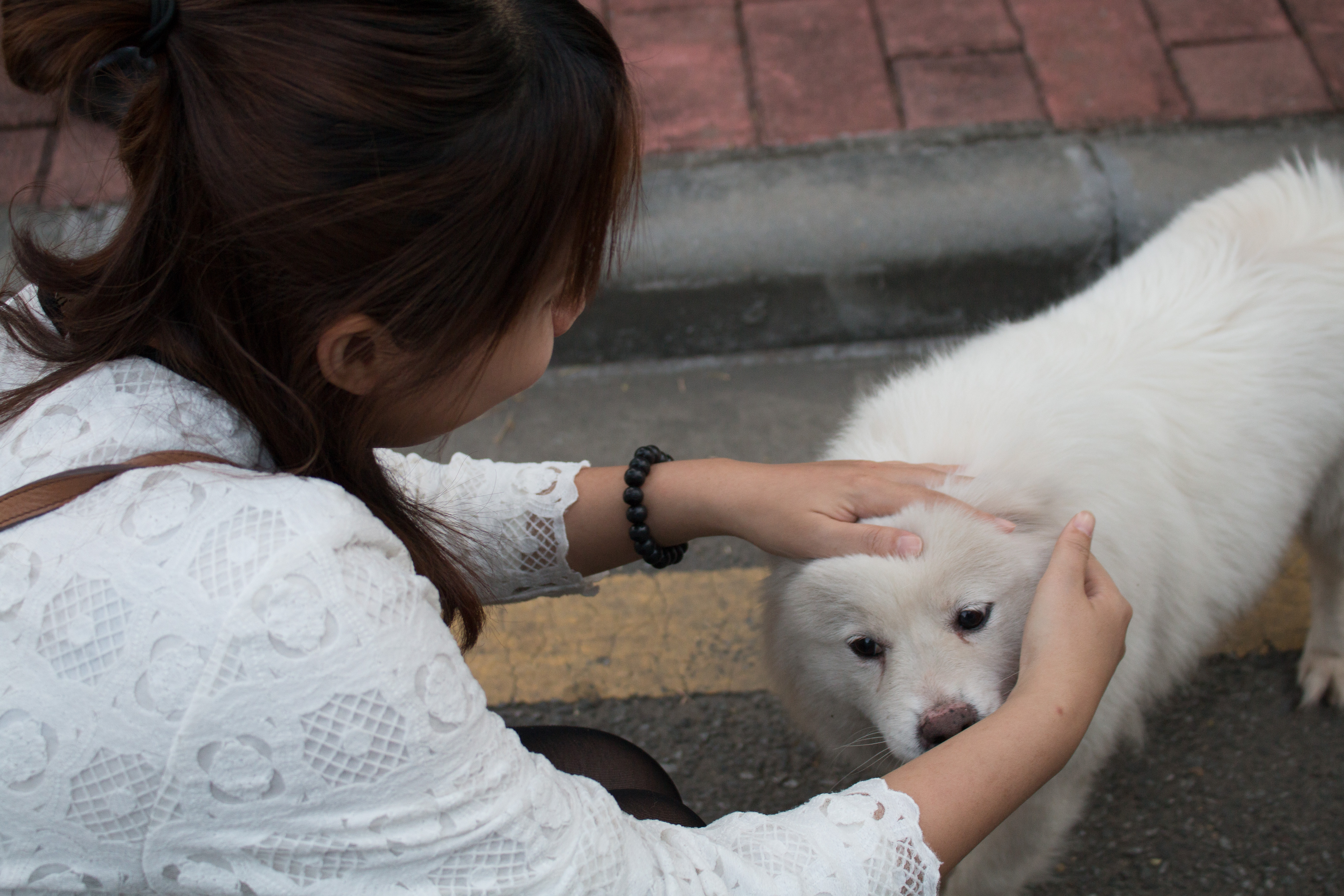 Chinese friend and white dog