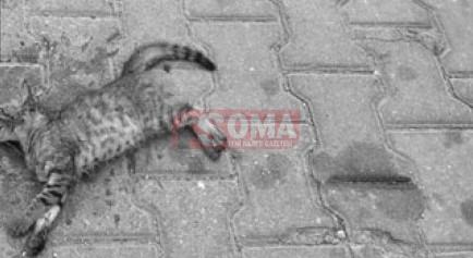 Komşu ilçede ölü bulunan kediler yürek dağladı