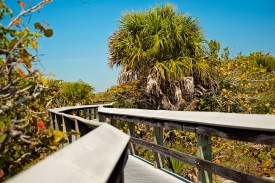 The boardwalk near Barefoot Beach has lots of zigs, zags, and gopher tortoises.