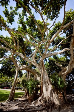 There are many gorgeous giant trees in the area.