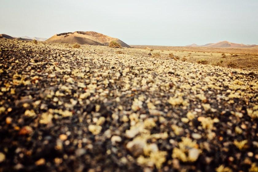 Lanzarote Lichen