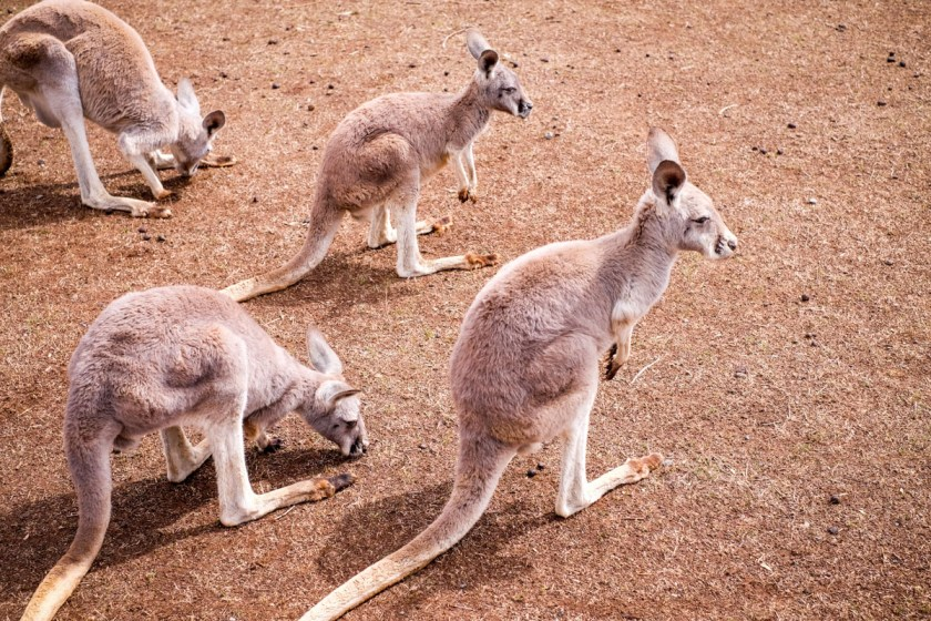 Australia-1505-1-2
