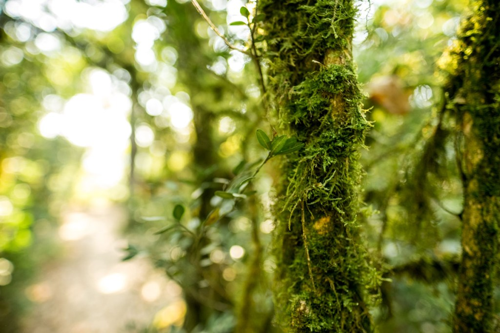 Mossy tree at Marqueyssac