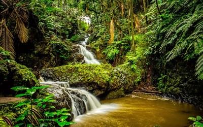 The Hawaii Tropical Botanical Garden