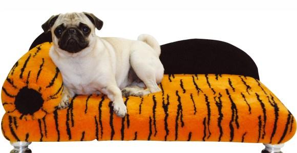 Petshop: Imagine seu cachorro de estimação no divã