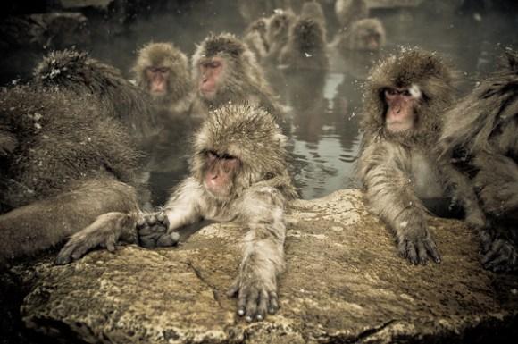 Foto macaco da neve