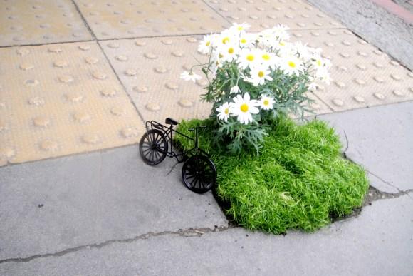 Mini jardim bicicleta