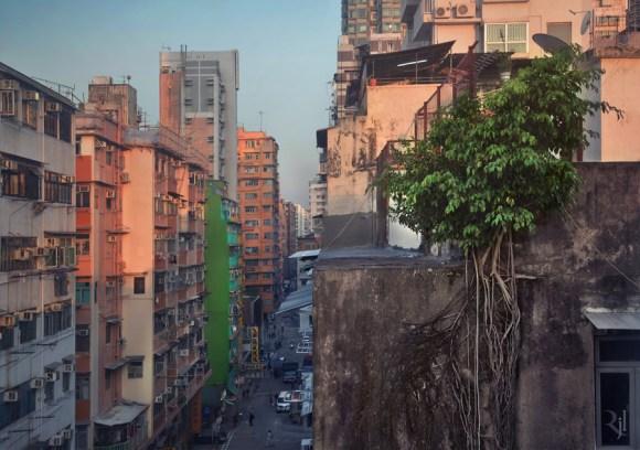 Árvores no concreto (6)