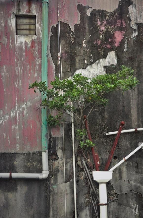 Árvores no concreto (8)