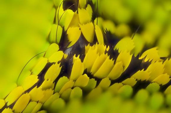 Asa de borboleta em macro (6)