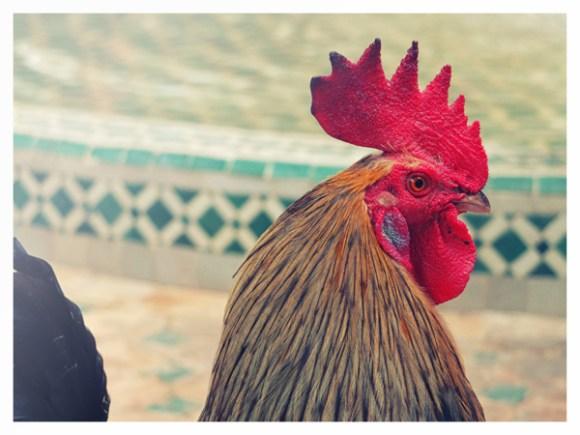 Marrakech - Marrocos (30)
