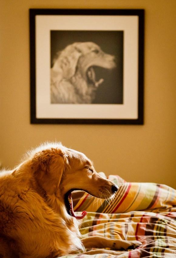 Momento exato - cão - Jill Maguire
