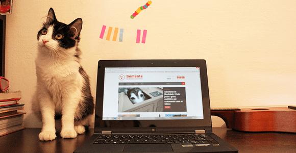 Por que os novos ultrabooks com tela touch podem ser úteis a você