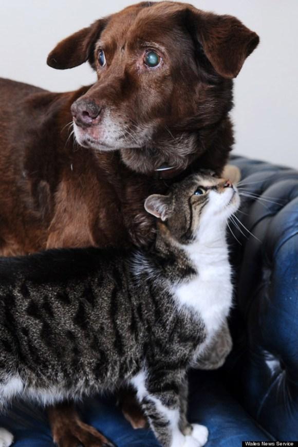 cao-cego-gato-guia