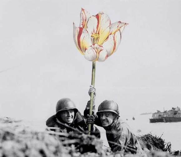 flores na guerra (4)