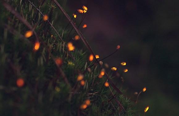 Bioluminescência digital 1