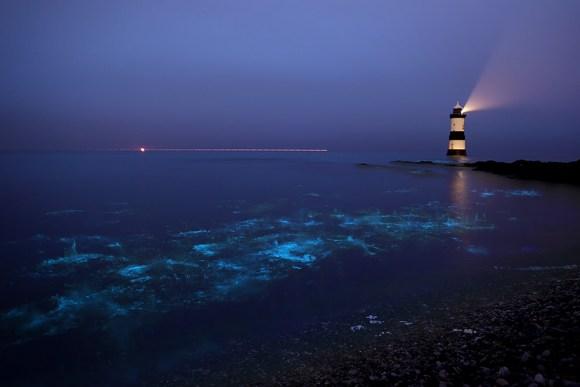 Praias luminescentes 4