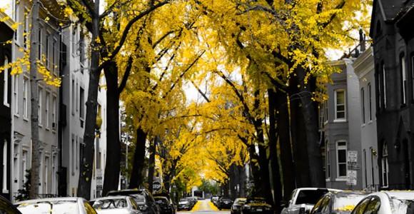 15 ruas extraordinariamente lindas graças à vegetação