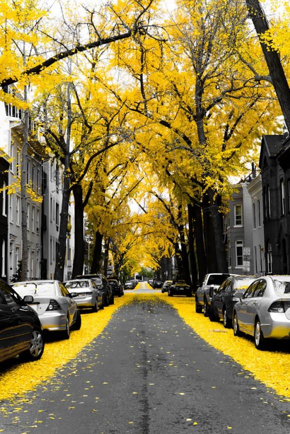 Ruas mais bonitas do mundo - 12 - Washington - EUA