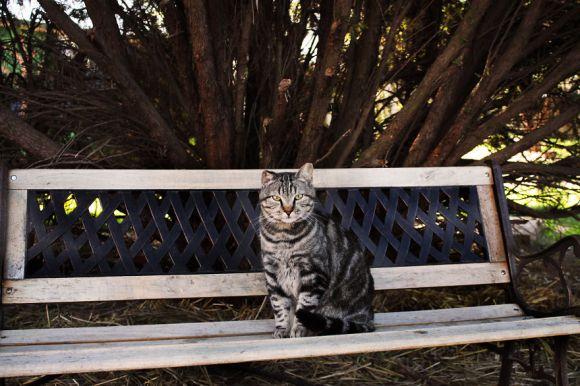 Santuário dos gatos 12
