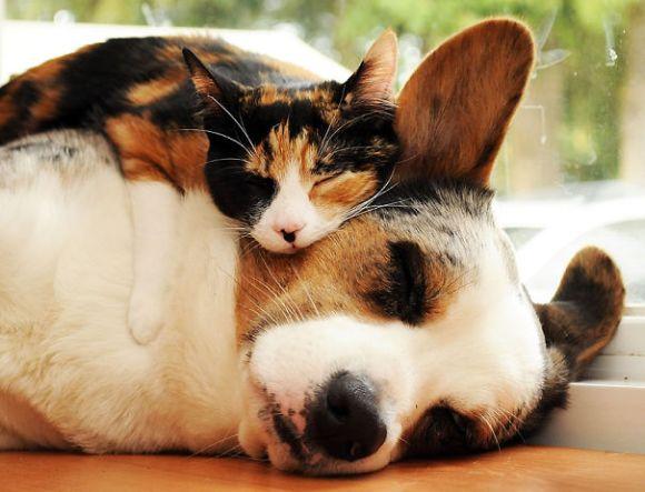 Gatos e cães 19