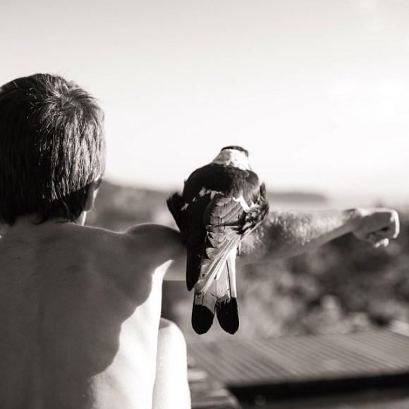 Amizade entre menino e pássaro 14