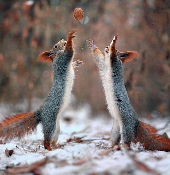 Esquilos fofos - fotografia 1