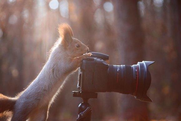 Esquilos fofos - fotografia 12