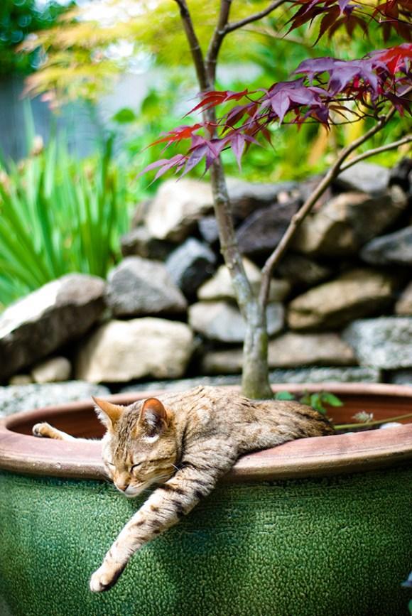 Gatos em vasos 14