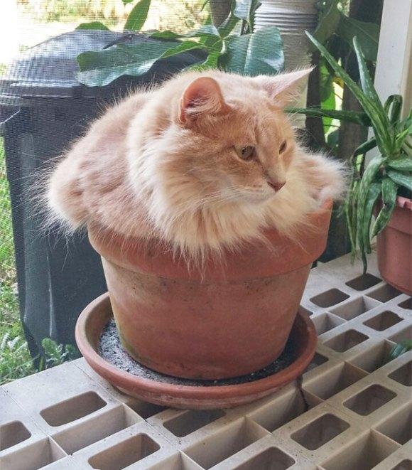 Gatos em vasos 4