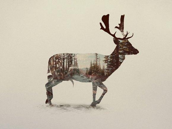 Fotos de dupla exposição - animais e floresta 17