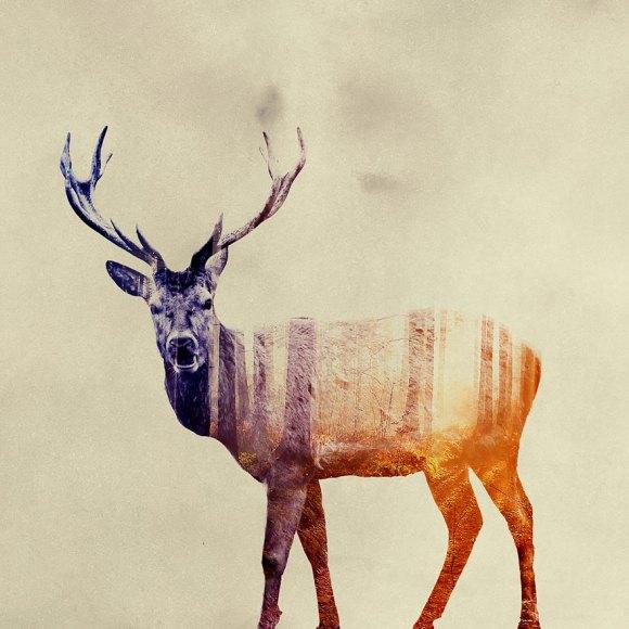 Fotos de dupla exposição - animais e floresta 21
