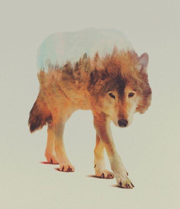 Fotos de dupla exposição - animais e floresta 6