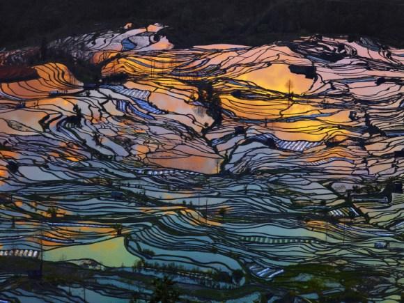 Campos de arroz chineses 1