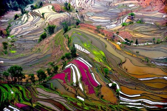 Campos de arroz chineses 6