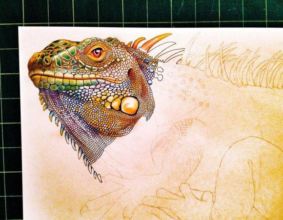 Desenho de lagarto 2