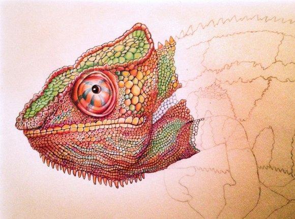 Desenho de lagarto 7