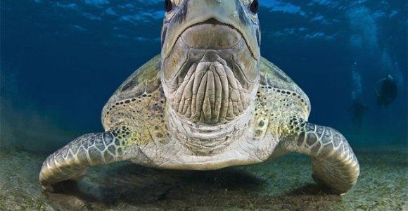 Conheça o projeto que está espalhando fascinantes fotografias subaquáticas pelo mundo