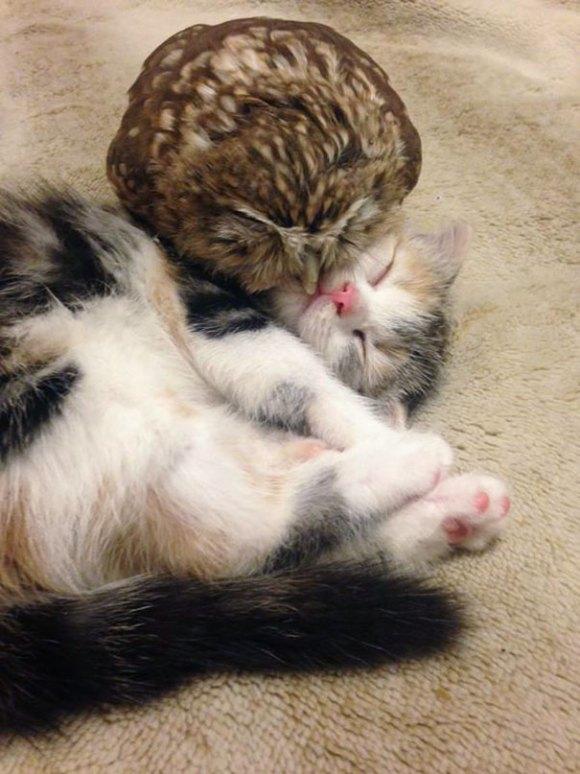 coruja e gato 2