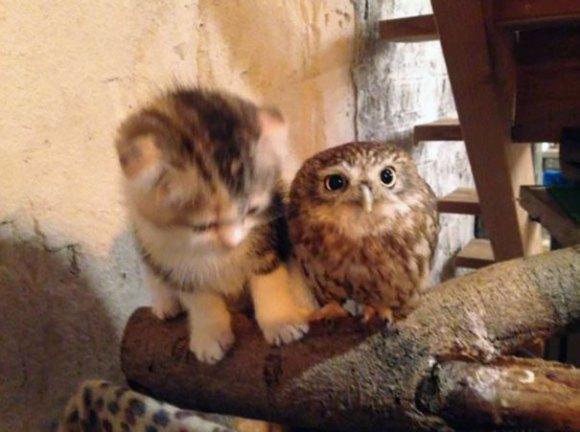 coruja e gato 3