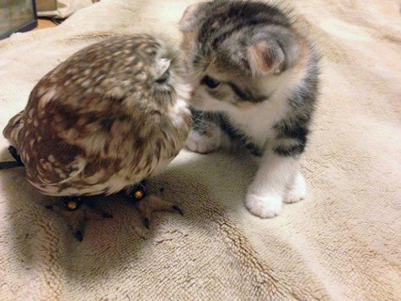 coruja e gato 4