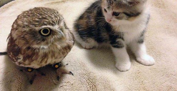 A amizade entre uma coruja e um filhote de gato vai inundar você de fofura