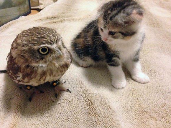 coruja e gato capa