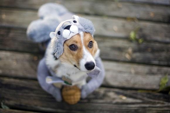 Fotos de cachorros 20