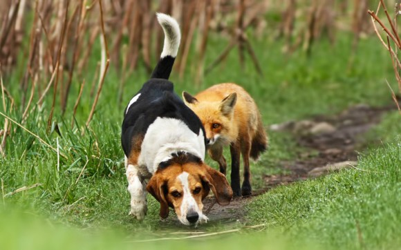 Fotos de cachorros 22