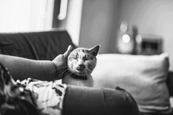 Fotografias de gatos 9
