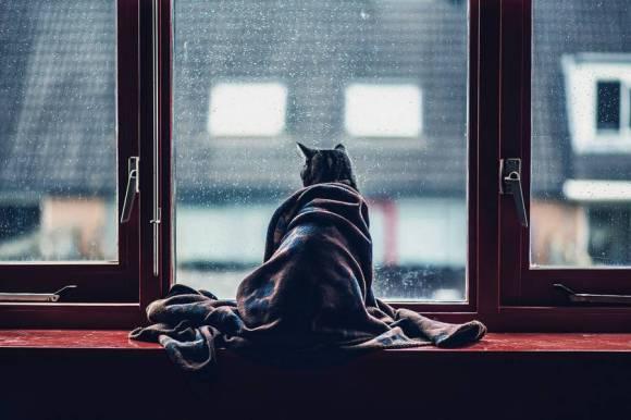 Fotos de gatos 1